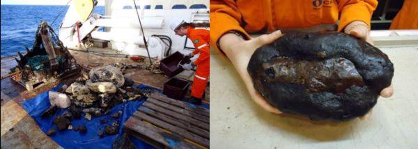 Alcuni campioni recuperati dal fondale marino.