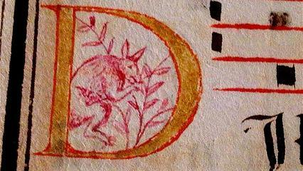 Il disegno risale a un periodo che va dal 1580 al 1620 e, se autentico, dimostrerebbe che a quell'epoca qualcuno aveva già conosciuto il tipico animale australiano